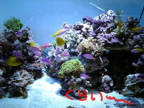 20080122hana2.jpg