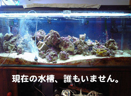 20080317yako120.jpg