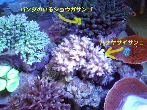 20080331pand.jpg