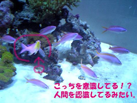 20080512pq2.jpg