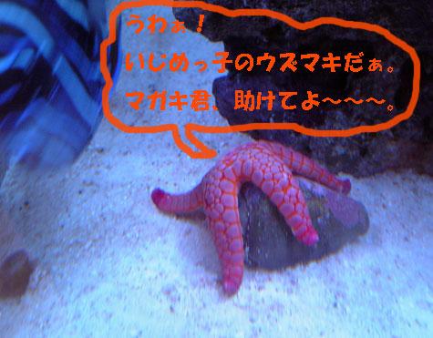 20080705ikanaide1.jpg