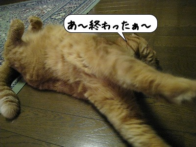 20081021_001609.jpg