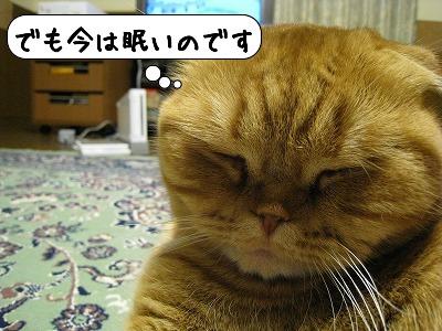 20090105_011236.jpg