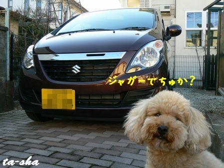 2_20090118173854.jpg