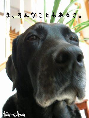 3_20090130200447.jpg