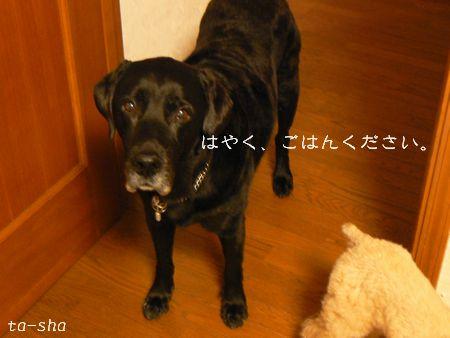 4_20091021200811.jpg