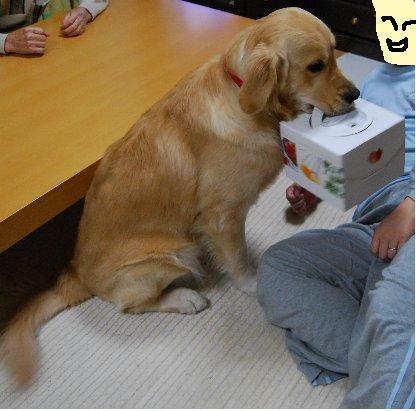 タロとケーキ箱