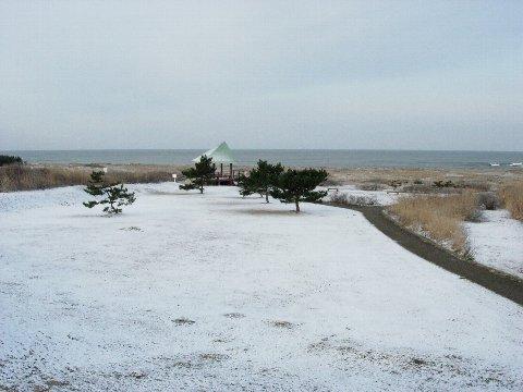 今朝の雪の風景