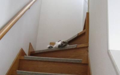 階段でころん-1