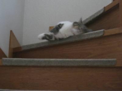 階段でころん-1-2
