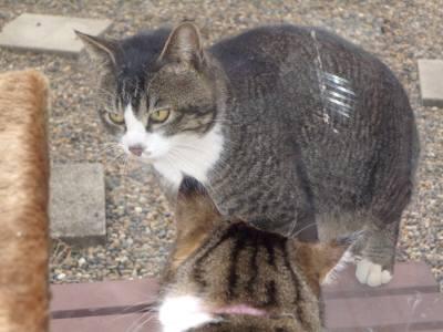 ちゃびー似の猫-3