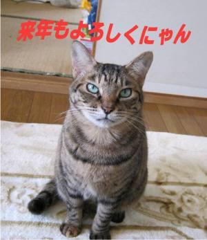 姫ごあいさつ-300pg