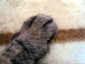たんたんの指-2