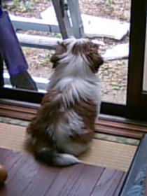 太郎がただの毛玉の頃。