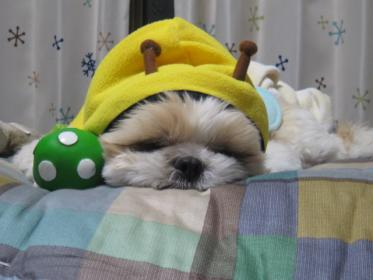 おやすみミツバチ