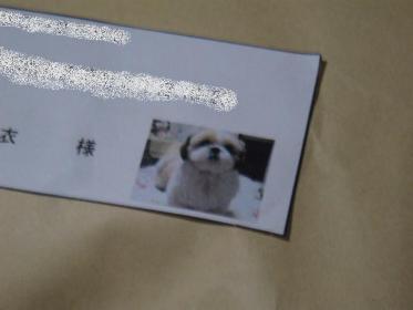 太郎の写真。