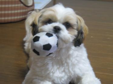 ボールで遊んでよ。