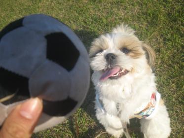 ボール投げ。