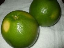 この緑色 001