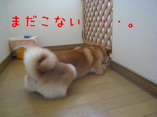 IMG_0288_convert_20081026213309.jpg
