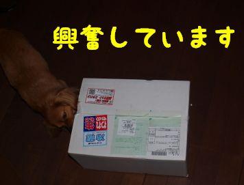 P70125720055.jpg