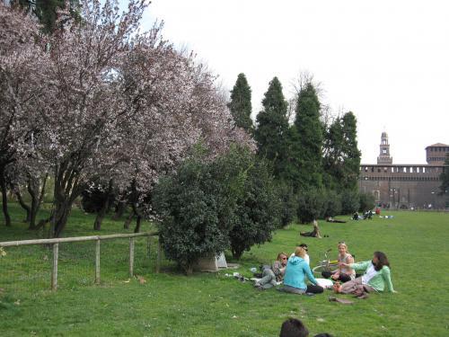 IMG 0657 convert 20090328194755 - ミラノの桜