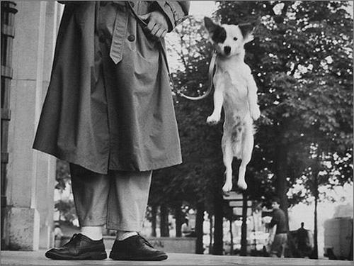 jumping-dog.jpg