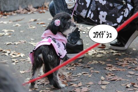 1120-11_20111121093545.jpg
