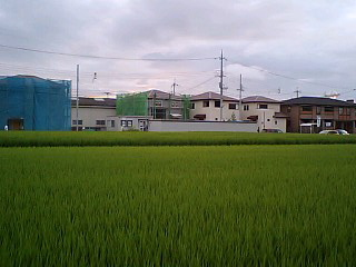 CA340209-0001.jpg