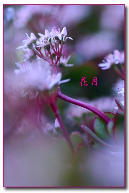 IMG_1591_edited-1.jpg