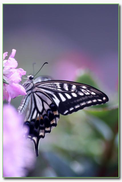 IMG_4785_edited-1_20090628015228.jpg