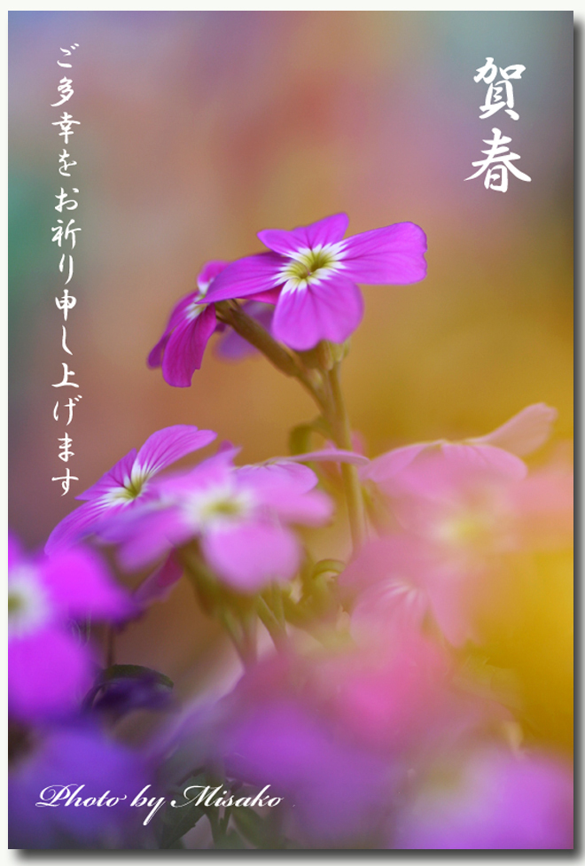 IMG_7661_edited-7.jpg