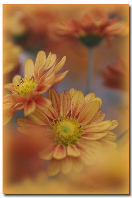 IMG_7954_edited-1_20091115013221.jpg