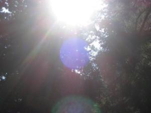 浅間神社参道の光