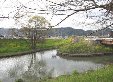 菜花の池みち