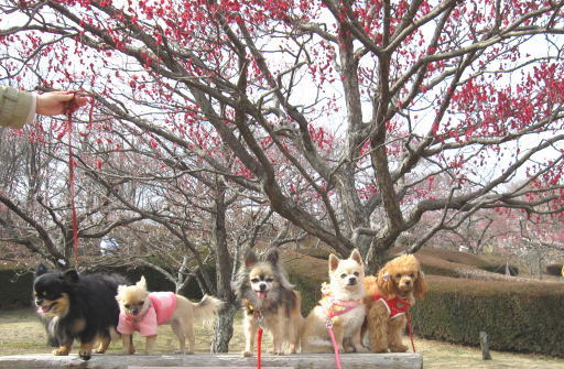 梅と犬たち
