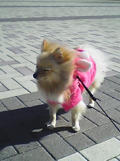 今日は 寒いでしゅよ。。。北風ピープーでしゅよ。。。