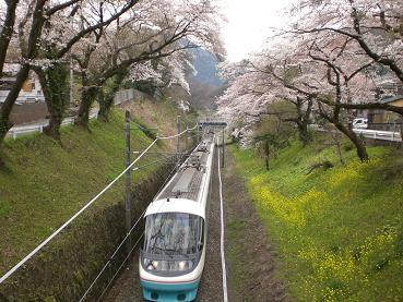 御殿場線の桜並木