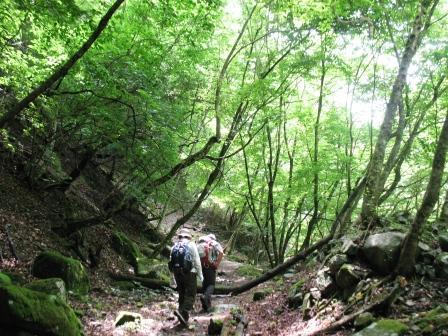 090710森の道