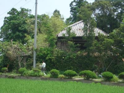 西側全景(2009/06/07)