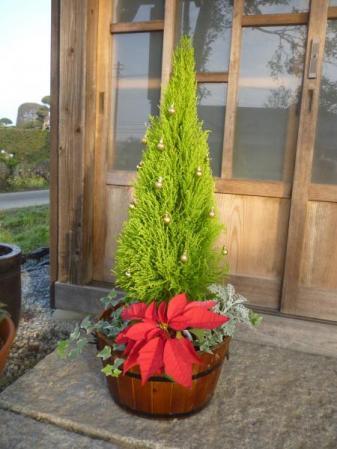 クリスマス用寄せ植え