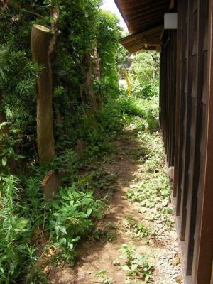 西側槙塀ビフォア(2009/07/25)