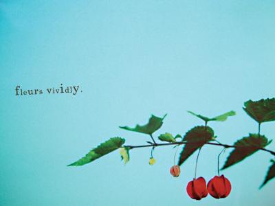 fleurs vividly