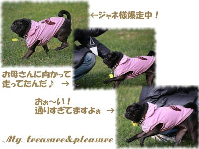 20081116_4.jpg