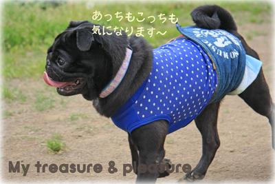 20090513_7.jpg