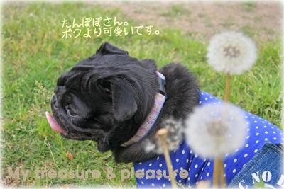 20090513_8.jpg