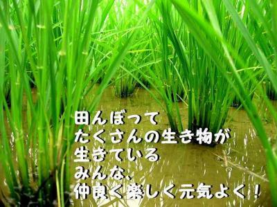tanbo.jpg