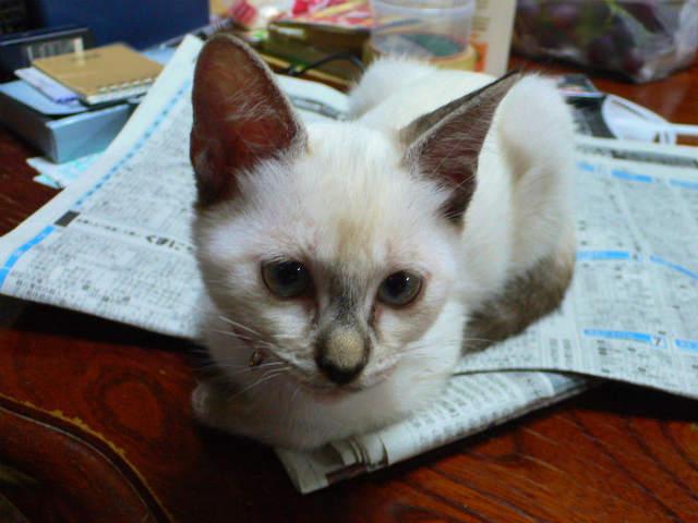 猫写真 012