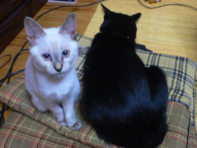 猫写真 010