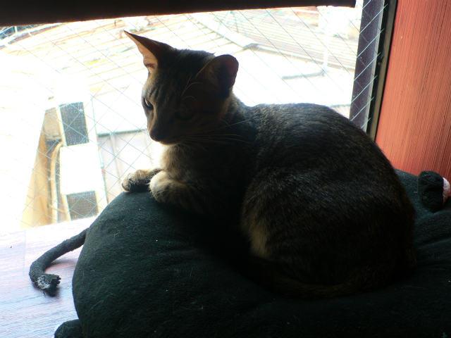 猫写真 009